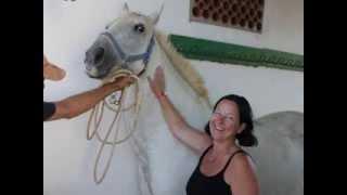 Finca Barroco VK Pferd,CONFIANZA, AKTION GREMLIN, PRE, Stute, 14 Jahre