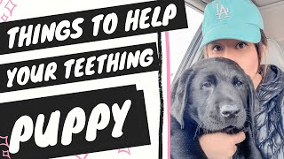 Teething Puppy Tips (Best Teething Puppy Toys)