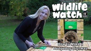 How to make a hedgehog highway!