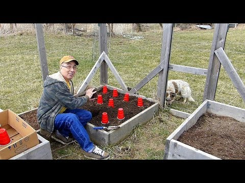 Onion planting and Gardening with Bunnies!