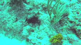preview picture of video 'Jan 14, 2015 Scuba Diving in Freeport'