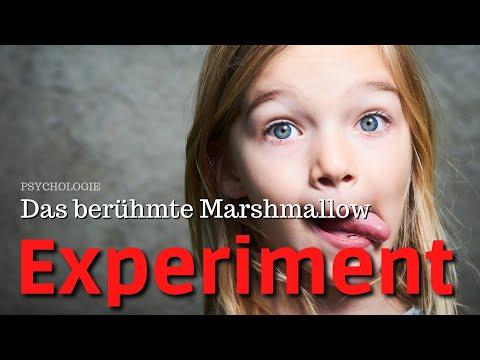 Hohe Zuckerdiät auf Insulin und