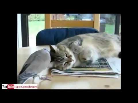 Gatti Pazzi Prova A Non Ridere Animali Divertenti Cani E
