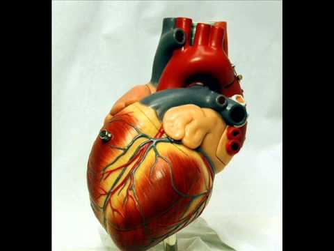 Ar širdies veikia kraujospūdį