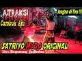 Atraksi Unik Cambuk Api & Panjat Bambu Jaranan Satriyo Mudo Original Live Begeneng (JANGAN DI TIRU)
