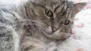 Очень нежная кошка Машка!
