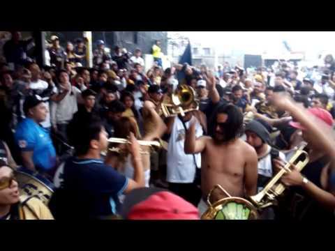"""""""Dale Azul y oro Pumas Rebel UNAM"""" Barra: La Rebel • Club: Pumas"""