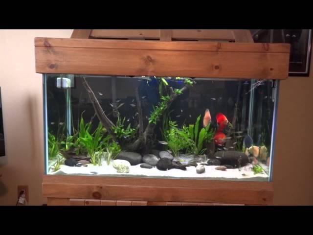 Discus Tank Update February 14, 2013