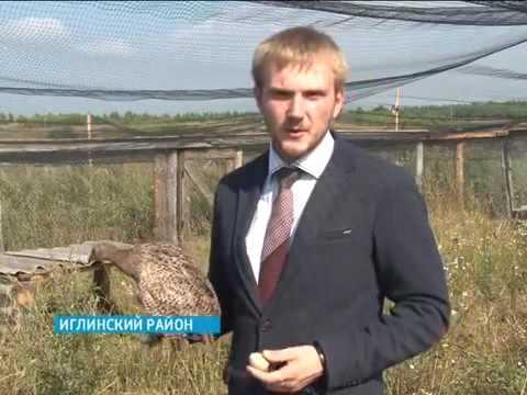 Иглинские фермеры выращивают европейских фазанов