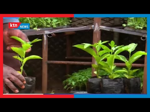 Youth and women in Kiambu set to benefit from agribusiness after gov't pledged to create market