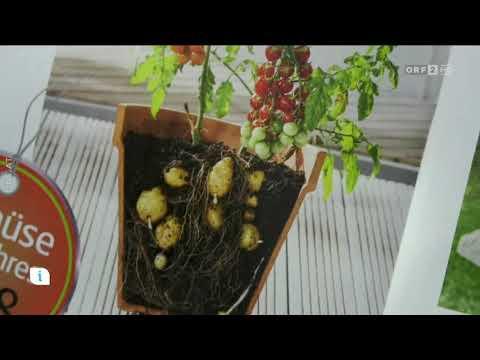 Gemüse des Jahres 2018