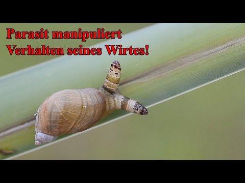 Das Präparat von allen Würmern heil-