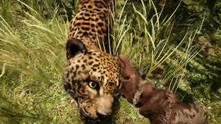 Far Cry Primal - Phần 4: 3 ngày 3 đêm mới nhằn được con quái khủng