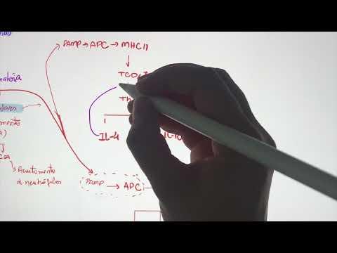 Endometrial cancer in pregnancy