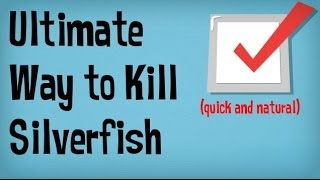 How to Get Rid of Silverfish in your Home | BEST Tips for Getting Rid of Silverfish Bugs Naturally