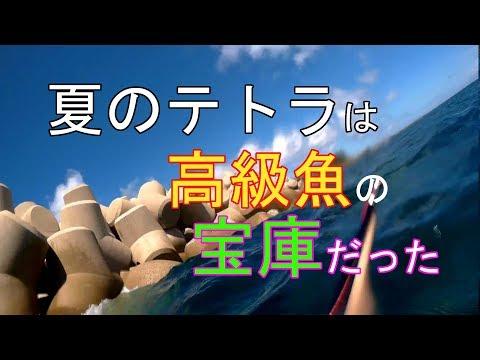 夏のテトラを潜って偵察【魚突き】【ならぎょEp.8】