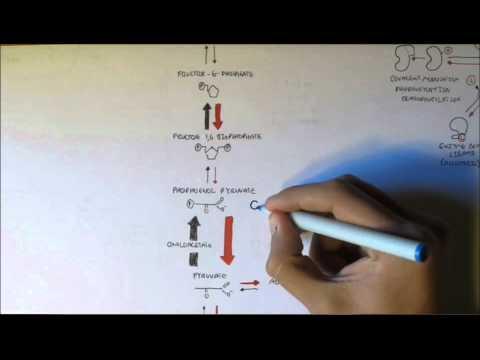 Kardiomyopathie Diabetes