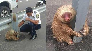 Pozitívné a dojemné momenty so zvieratami