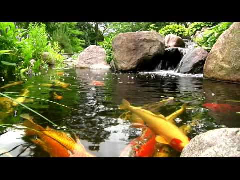Video York, Lancaster, Harrisburg PA Backyard Koi Fish Ponds, Waterfalls, and Fountains