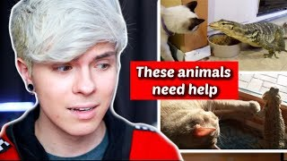 Pet Youtuber Reacts to Viral Lizard Compilation! *Cringe*