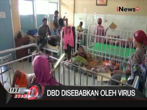 Video Berikut adalah penyebab dan gejala penyakit DBD agar bisa ditanggulangi - Special Event 05/02