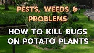 How to Kill Bugs on Potato Plants