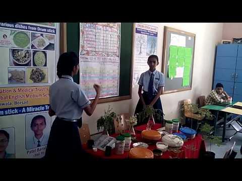 Maths - Science Fair @ Vatsalya Int