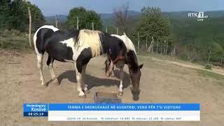 Mirëmëngjesi Kosovë - Kronikë Ferma e Drenushave në Vushtrri 18.09.2020