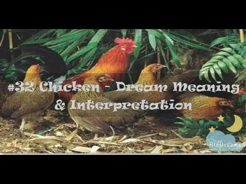 11 Dreams About Chickens - Meaning Interpretation