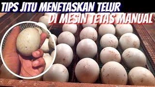 132. Phải bắt chước - Cách đúng để ấp trứng trong máy ấp trứng