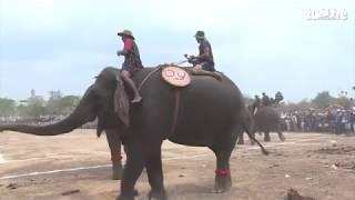 Thả hai cá thể voi về với môi trường tự nhiên
