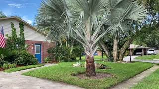 Four Tree Install Job in Winter Haven Florida