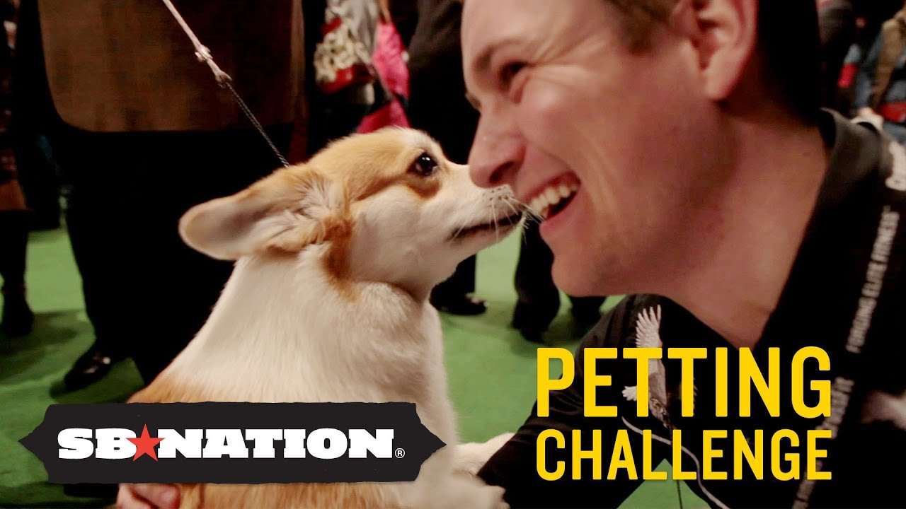 Westminster Kennel Club Dog Show: Petting Challenge thumbnail