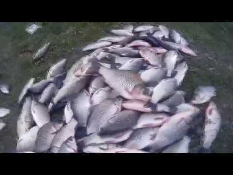 fishhungry правда или развод