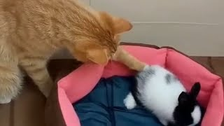 Смешные животные Милые кошки и Прикольные собаки Калейдоскоп за 25 08 2018