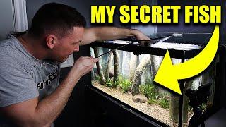 SECRET FISH added to AQUARIUM - The king of DIY