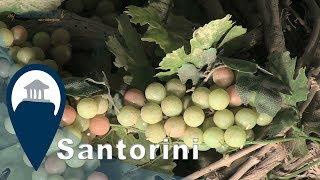 Santorini | Winery Tours