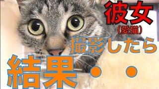 【猫】初めてカメラをむけられるネコ!!【成海真】The cat which is pointed a camera to for the first time【CAT】