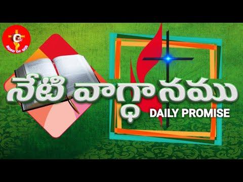 Today's promise 09-01-2019 (видео)