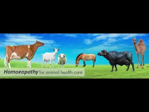Viburnum galandféreg - Férgek, úgynevezett kapacitás - Mi segít a férgektől élni