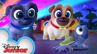 Bingo And Rolly Save The Sea Turtles 🐢| Puppy Dog Pals | Disney Junior