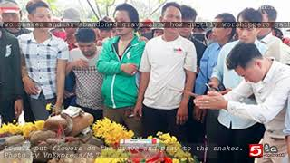 Two snakes and an abandoned grave show how quickly worshippers gather in Vietnam