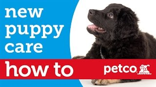 How to Prepare to Bring a New Puppy Home (Petco)