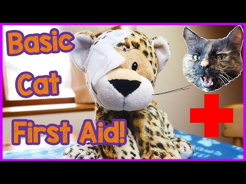 Basic Cat First Aid - How To Administer First Aid To Your Cat. Basic First Aid for Cat Owners! 🐈🏥