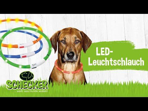 Leuchtschlauch / Leuchthalsband / Leuchtband für Hunde von Schecker