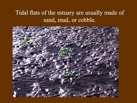 Oceanography: Estuaries Lecture