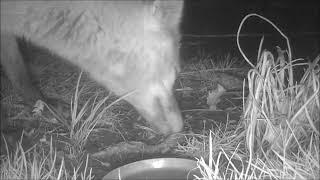 Wildlife Trail Camera - 9.3.2020