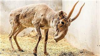 11 Critically Endangered Animals