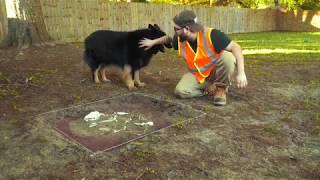 Dog Burials 101