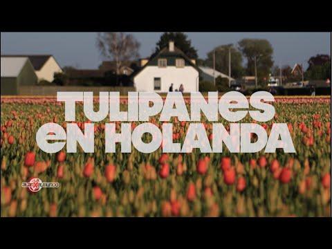 Los campos de Tulipanes en Bici   Países Bajos #7